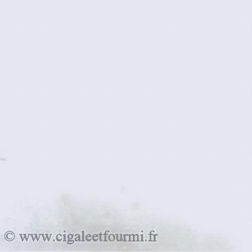 EMAIL GRES BLANC MAT - 500g - Emaux grès en poudre 1240°C - 1280°C - Cigale et Fourmi