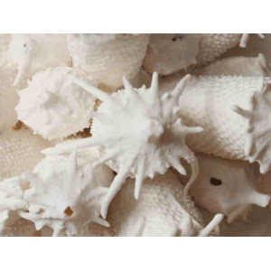 Photo PORCELAINE PAPER CLAY SCARVA  ES600 - SAC 5 Kg - achat terres-a-porcelaine en ligne avec Cigale et Fourmi